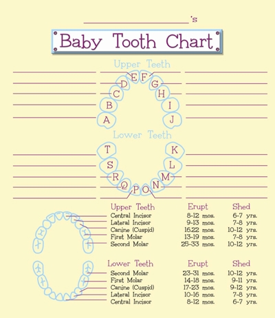 Tooth Fairy's Baby Tooth Organizer - 2BTA1